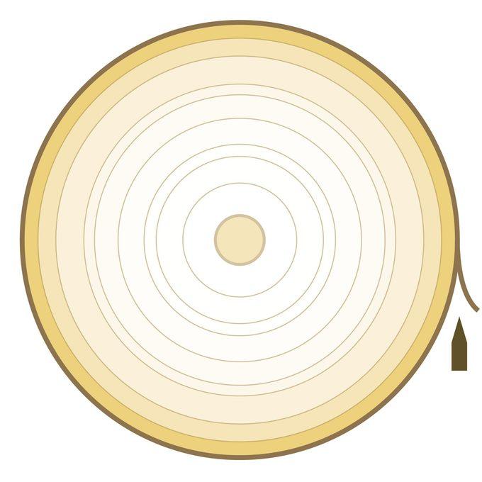 veneer rotary cut plywood