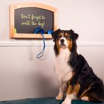 Pamper Your Pet With One of These Creations