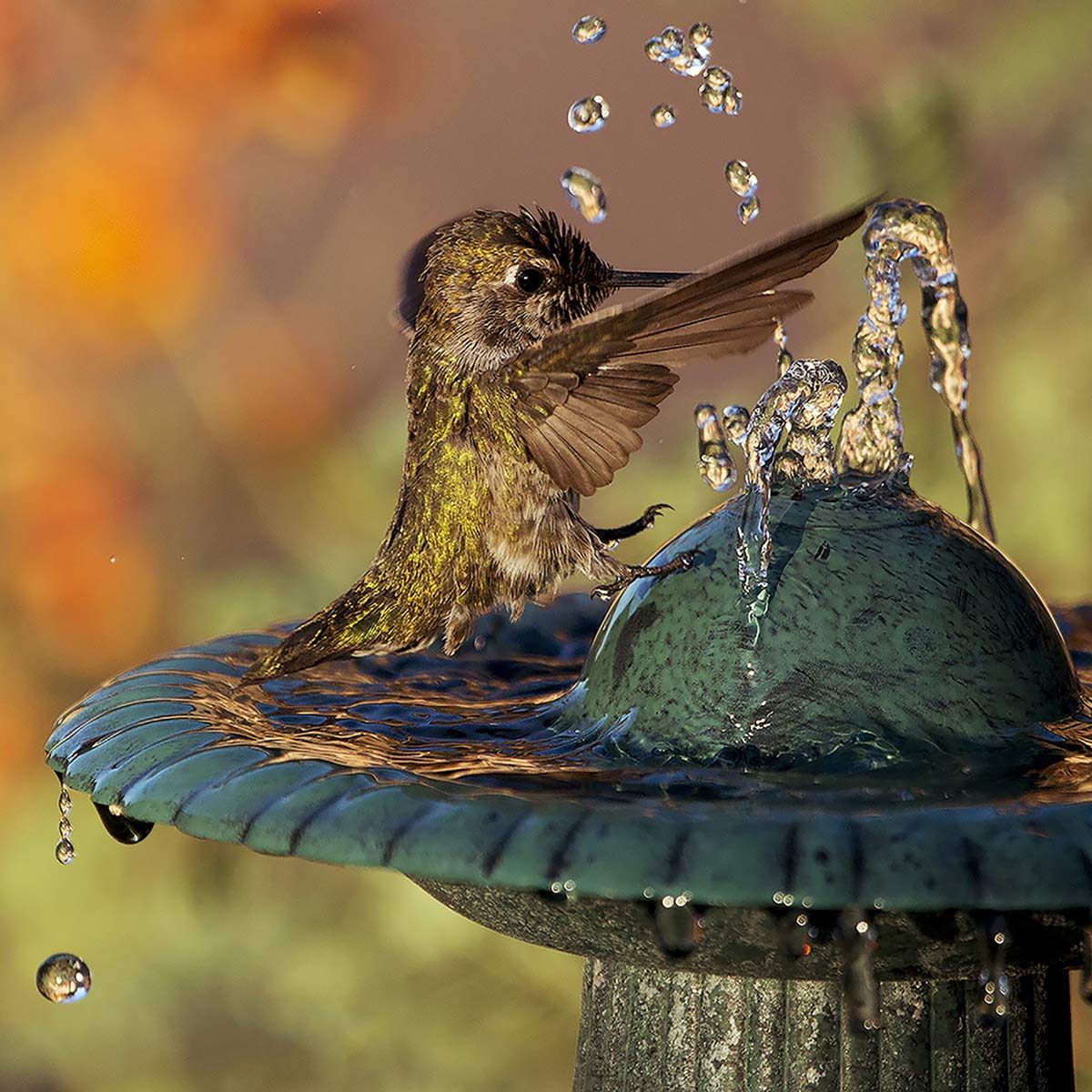 hummingbird bird bath fountains