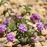 10 Drought-Tolerant Landscaping Ideas