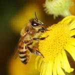 10 Crazy Things You Didn't Know About Bees
