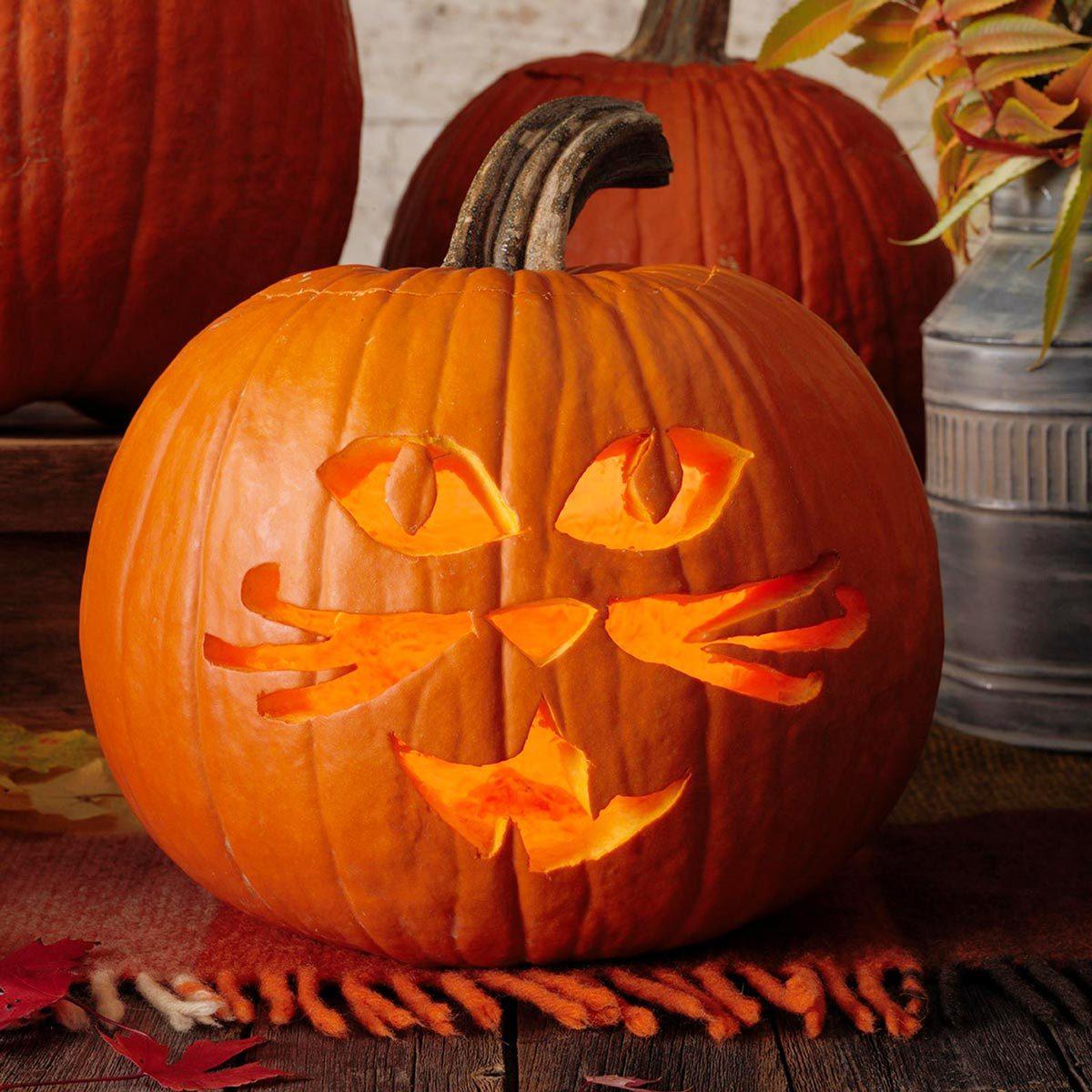 classic cat jack o'lantern pumpkin halloween