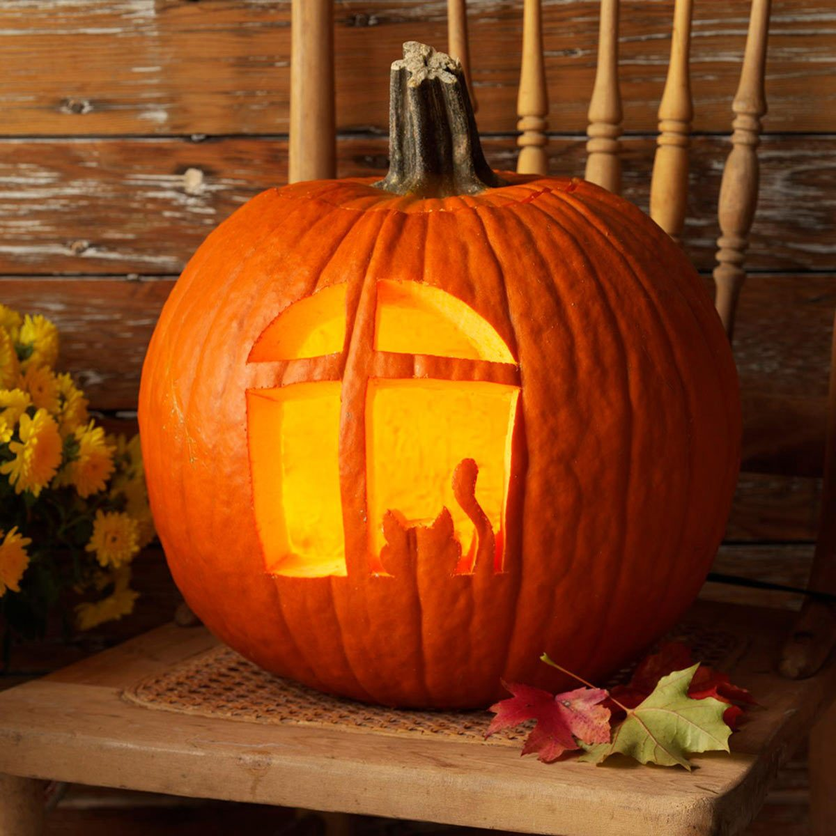 cat in the window halloween pumpkin carving jack o'lantern