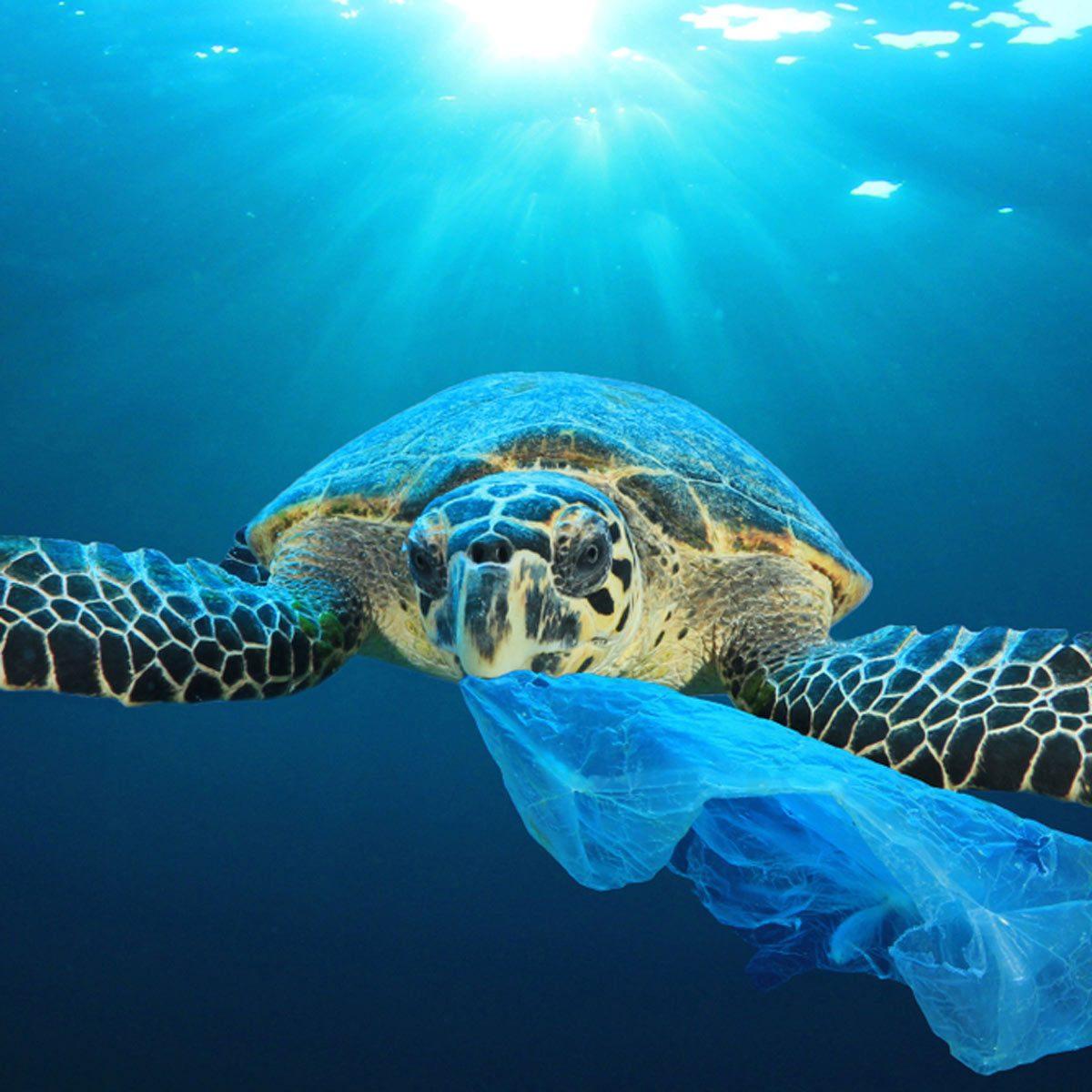 turtle ocean plastic bag ocean garbage patch