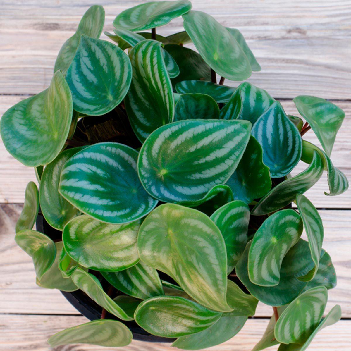 leaf of nontoxic houseplants