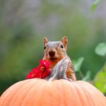 How to Keep Squirrels from Ruining the Pumpkins on Your Porch