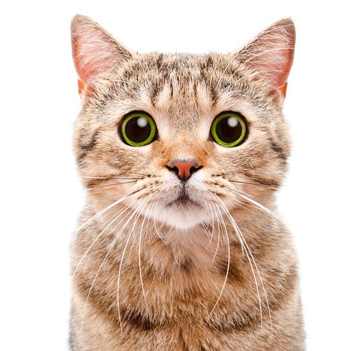 cat allergens