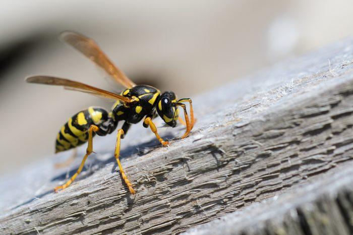 Wasp, wasp on wood,