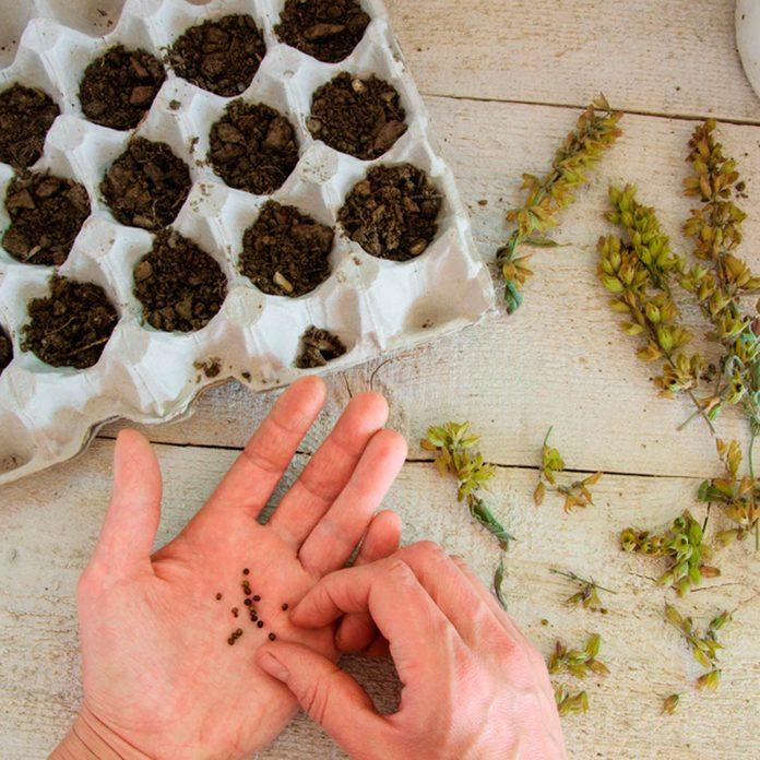 starting seeds in egg cartons