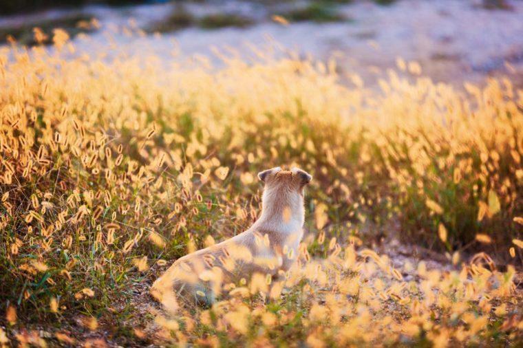 dog in wild field