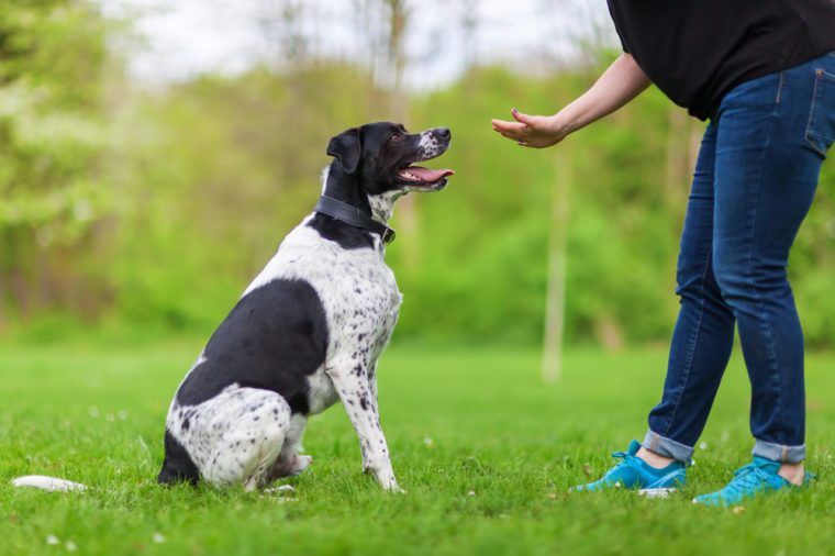 woman gives a command to her mixed breed dog
