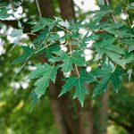 10 Worst Trees for Your Home's Plumbing