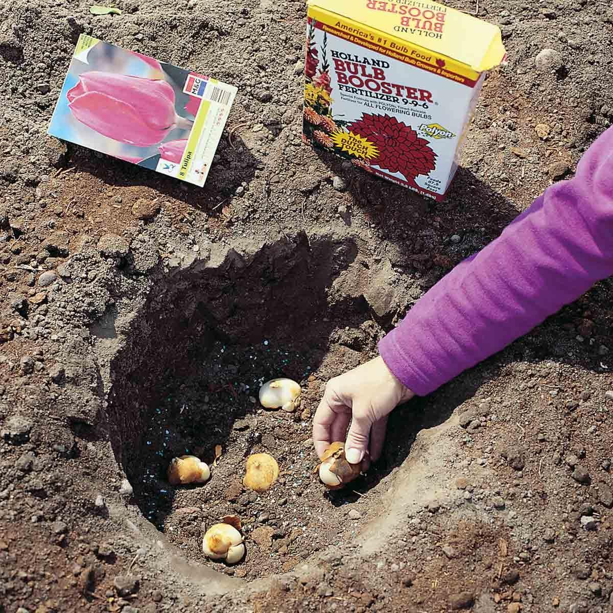 planting depth