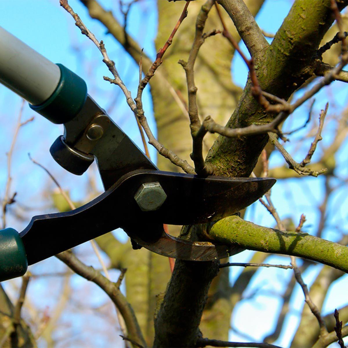 pruning tree in winter
