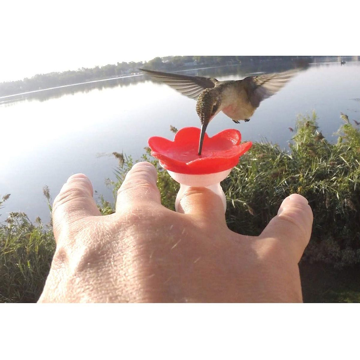 Ring hummingbird feeder