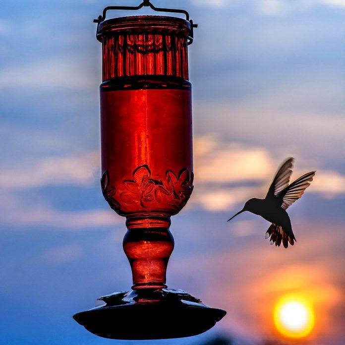 Hummingbird-Bird-Feeder