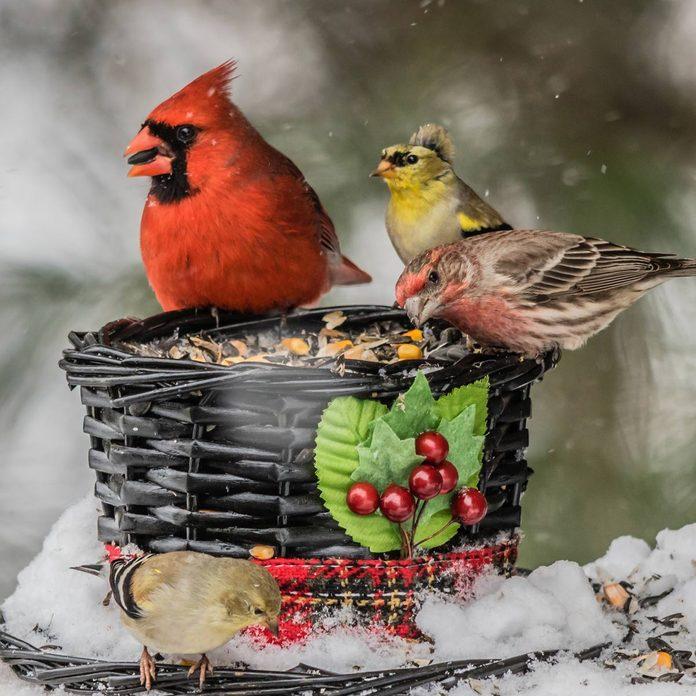 Wicker-Basket-Bird-Feeder