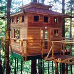 Amazing DIY Treehouse Ideas and Building Tips