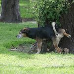 Why Do Dogs Kick Up Your Lawn After They Pee?