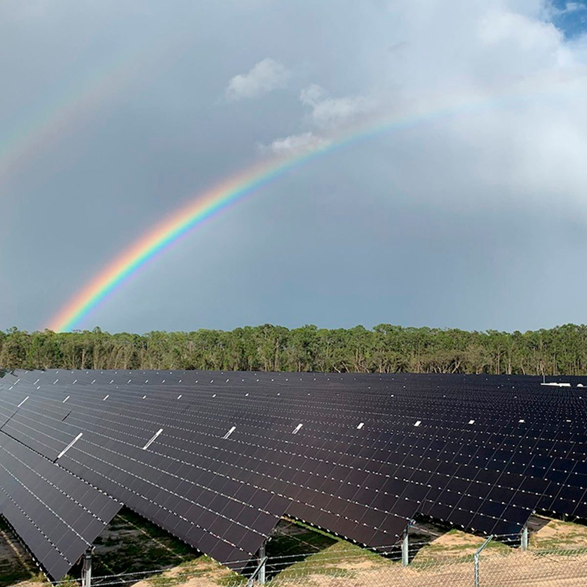 Solar farm at disney world