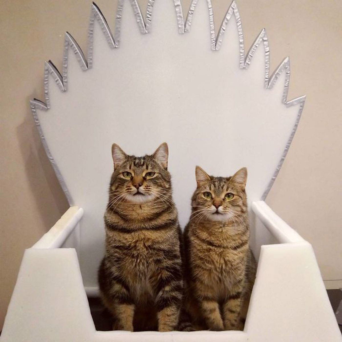 Winterfell-Cat-Throne
