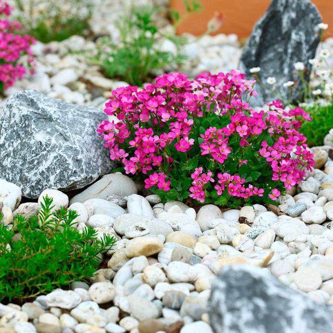 rock flower beds