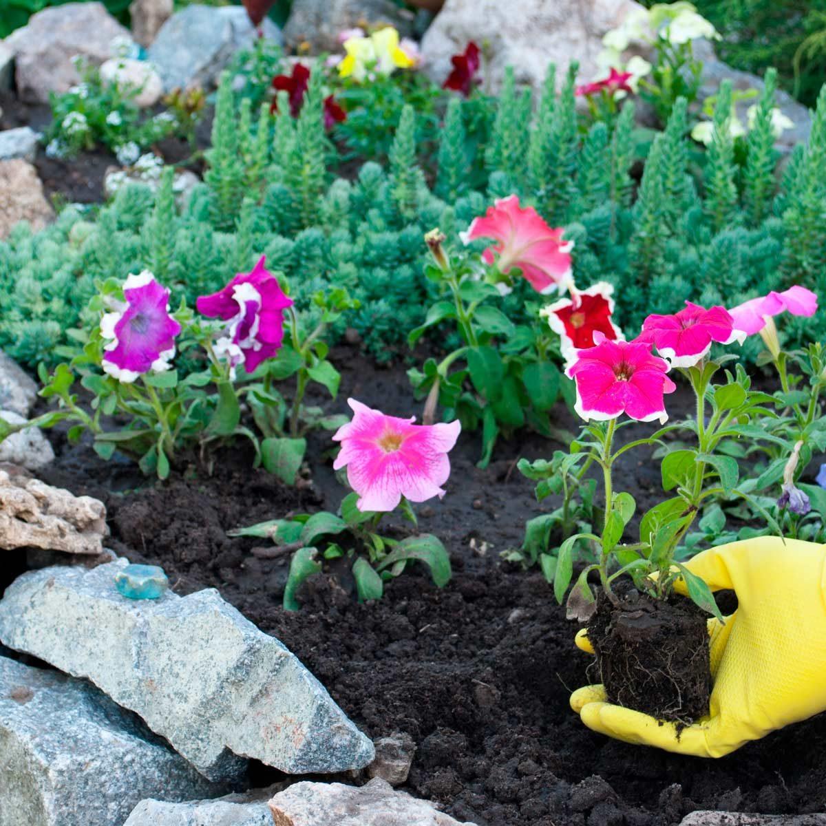 flower bed stones