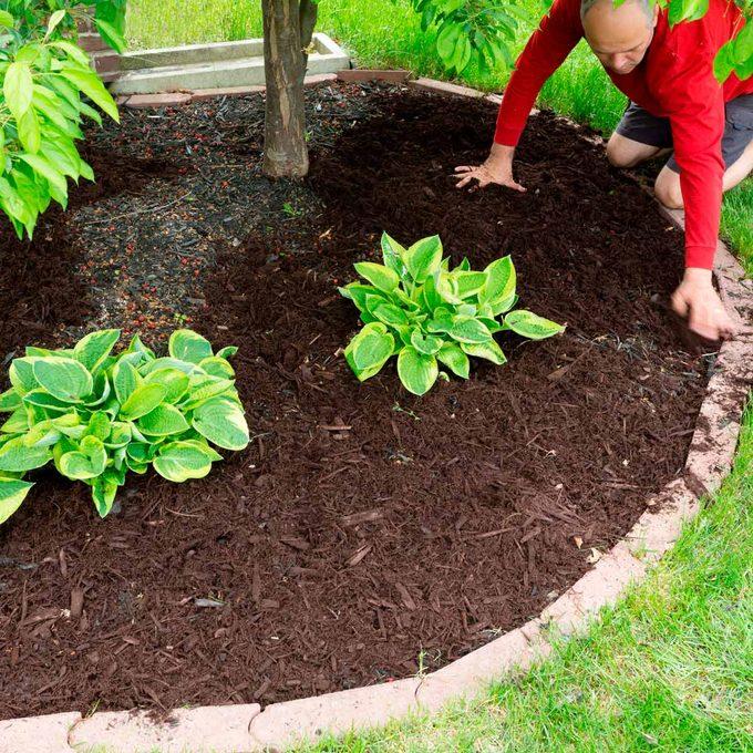 Gardener adds mulch
