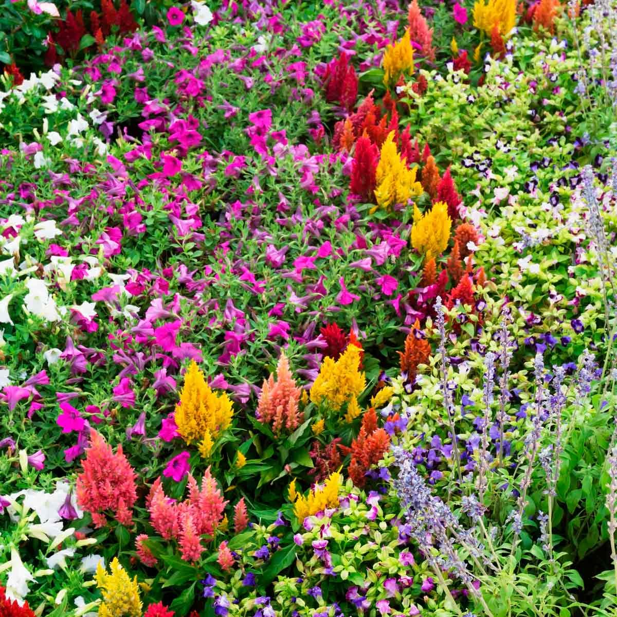 flower bed ideas for full sun