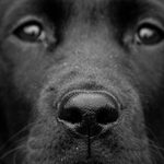 Why Are Dog Noses Wet?