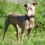 25 Dog Breeds That Don't Shed (That Much)