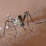 12 Mosquito Repellents That Are Worth Your Money