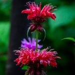 Best Flowers for Bees and Other Pollinators
