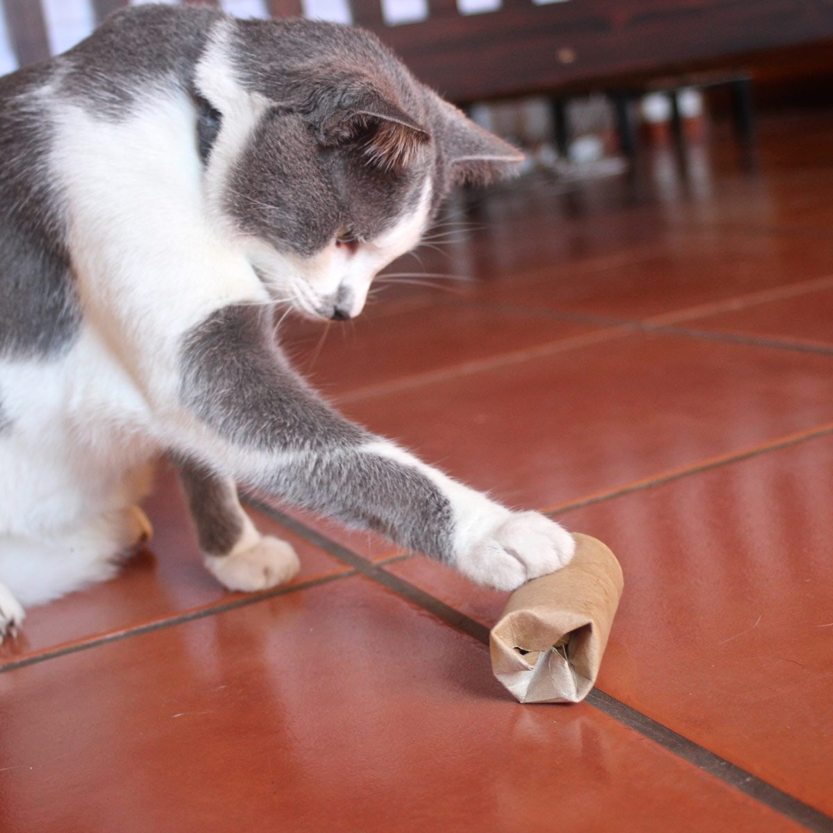 Food Puzzle for Cats DIY Cat Toy