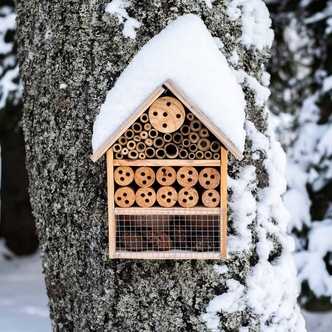 wooden insect house hung on tree in winter snow