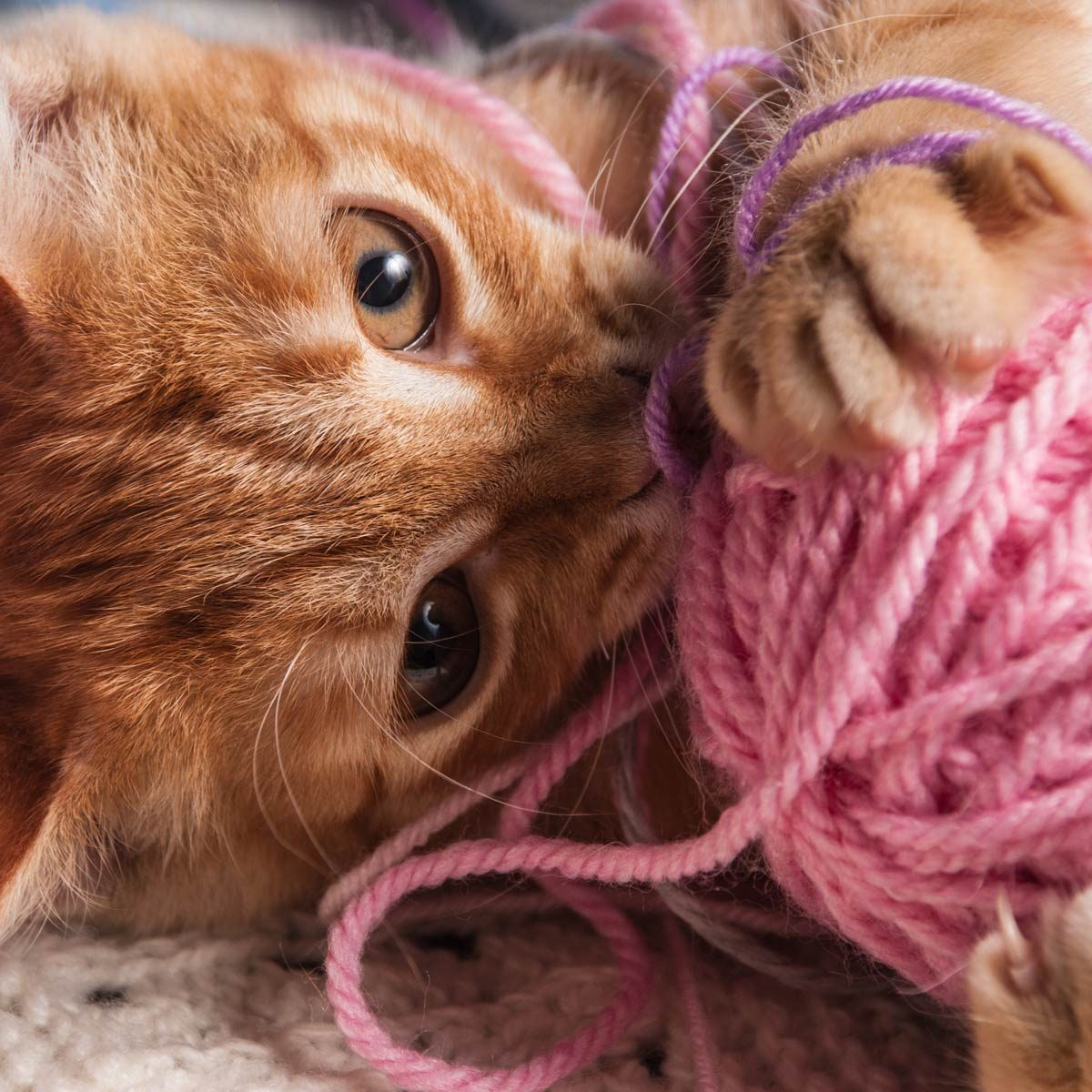 cat with yarn ball