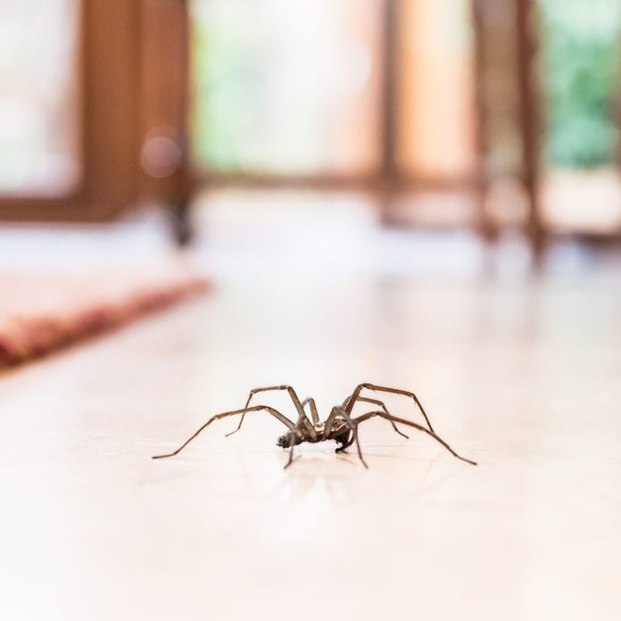 spider in the house