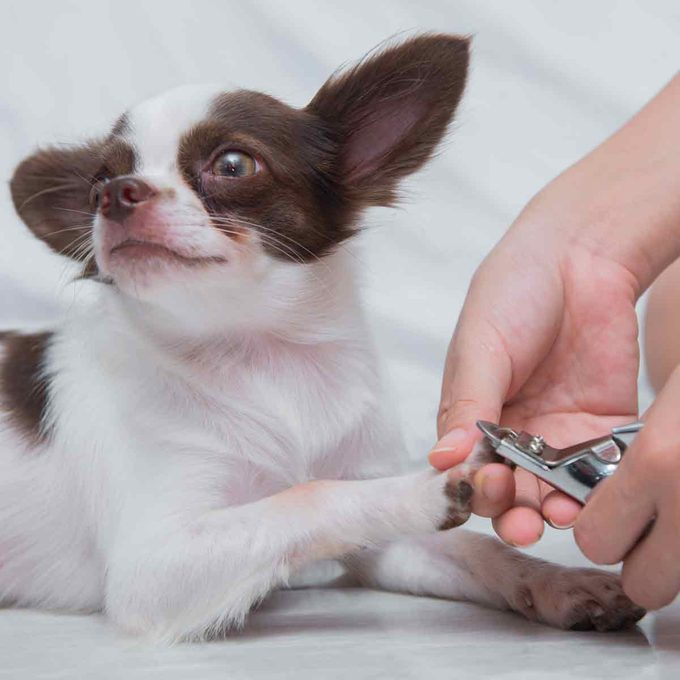 Clipping-a-dogs-nails