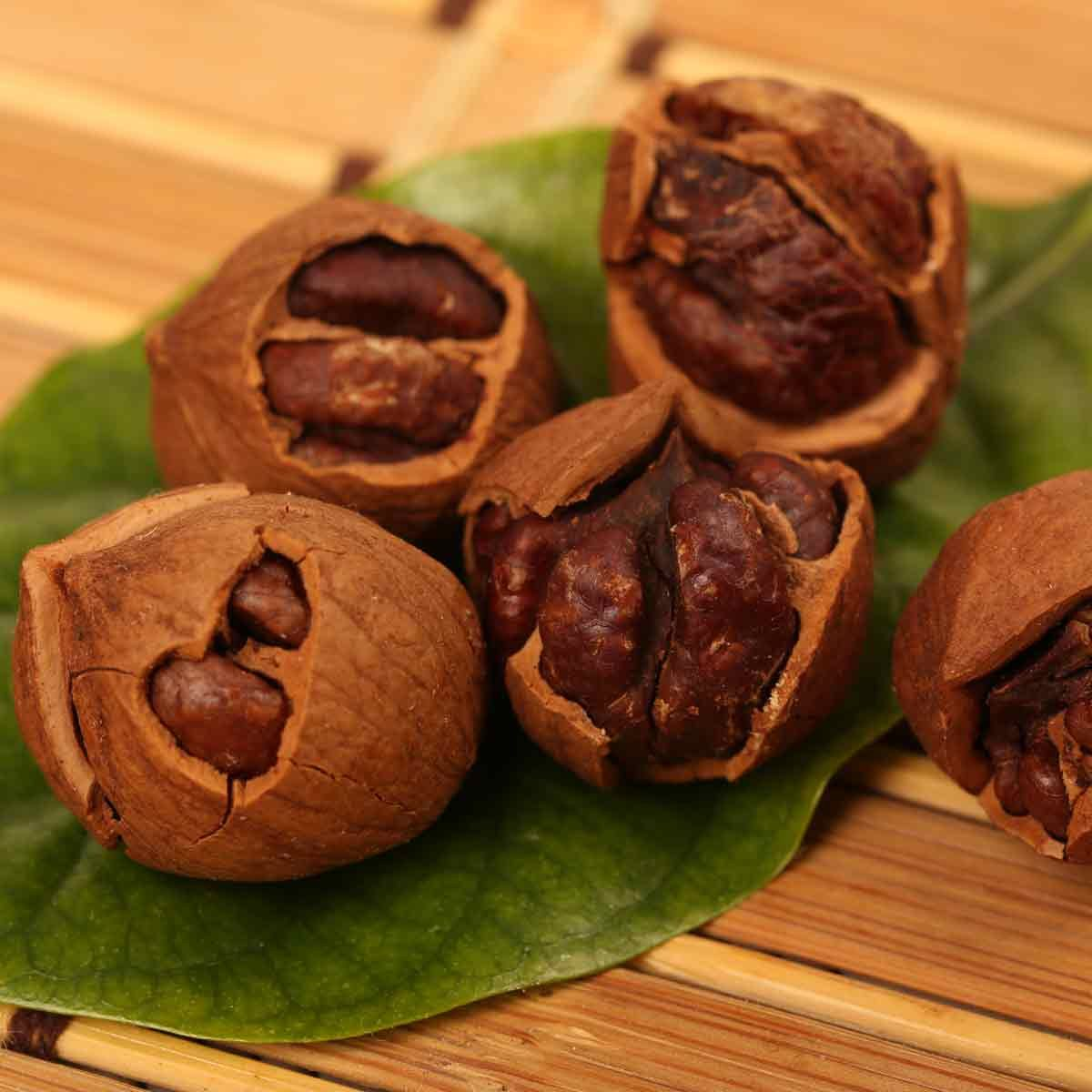 Large-hickory-nuts