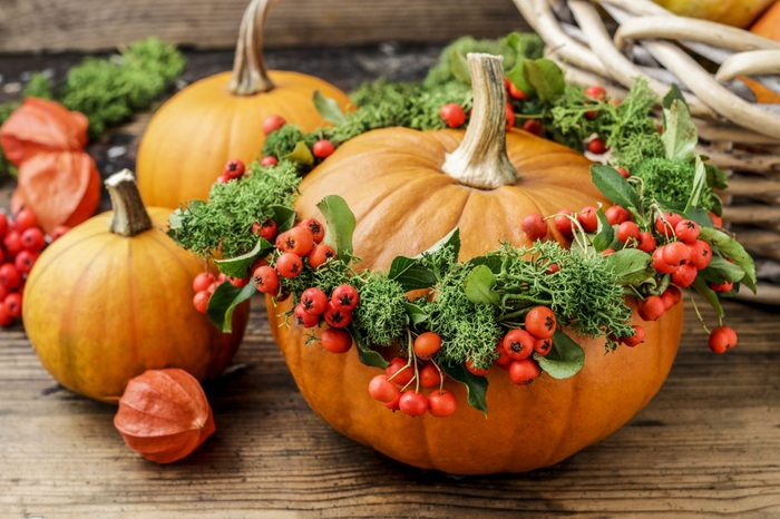 Pumpkin decorated with wreath with red berries (cotoneaster horizontalis) and green moss.