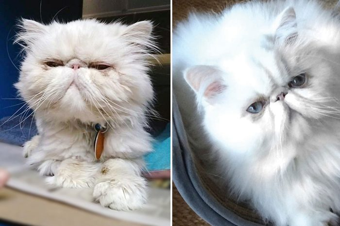 Yoda Before and After