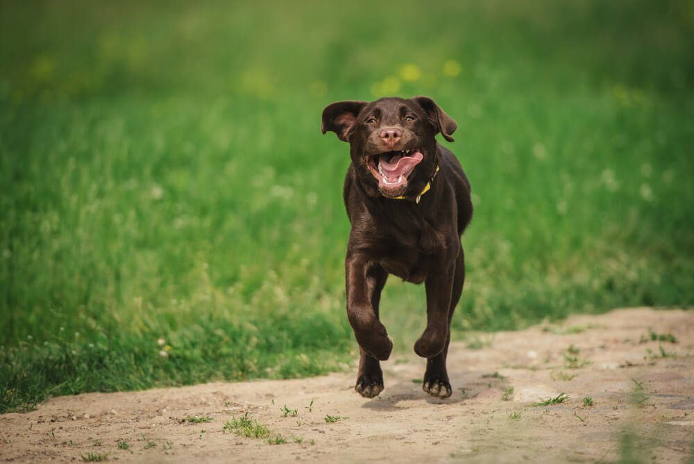 Dog running on the field