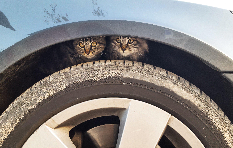 little cats hidden over car wheel