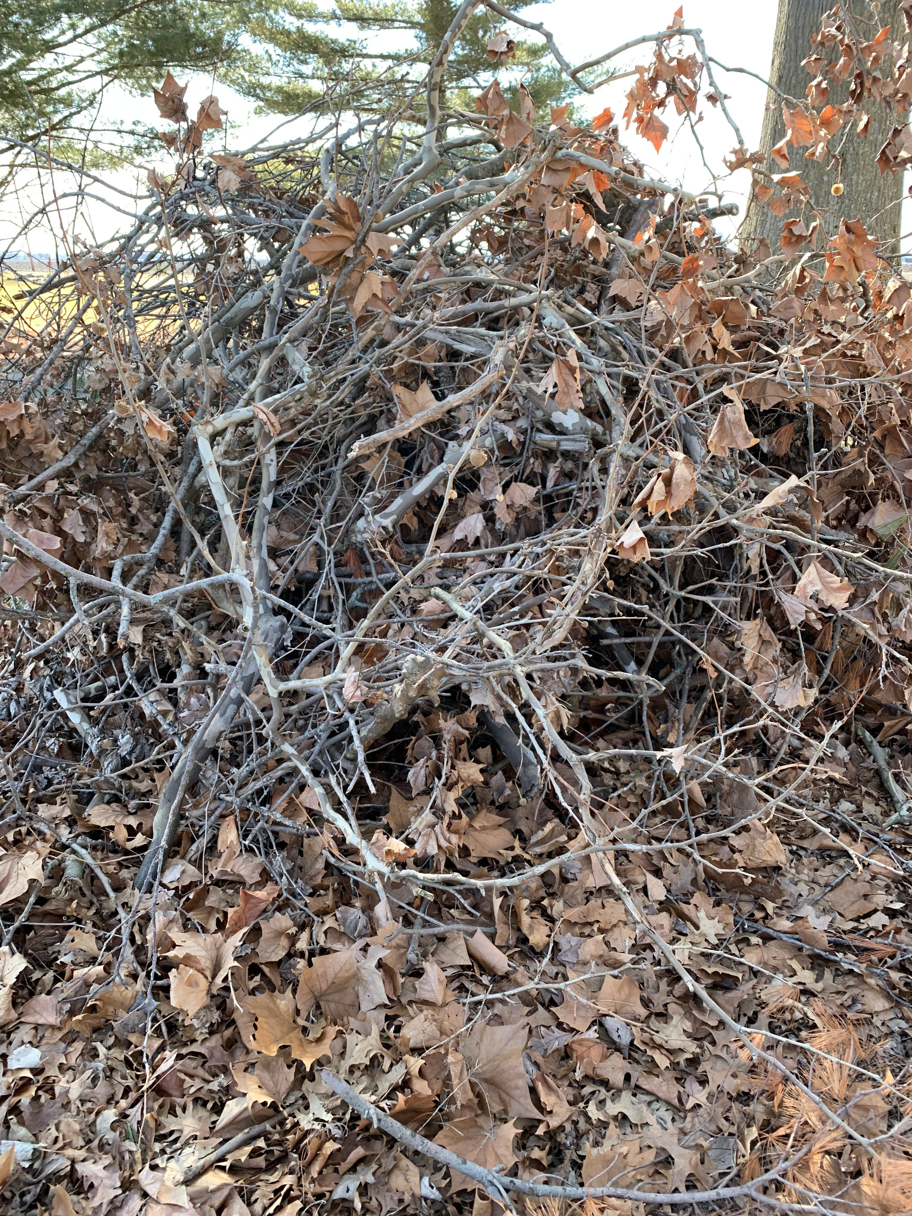 Large brush pile for shelter for animals in winter