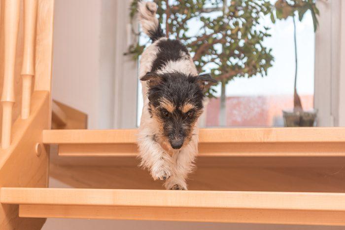 Dog runs down slippery staircase