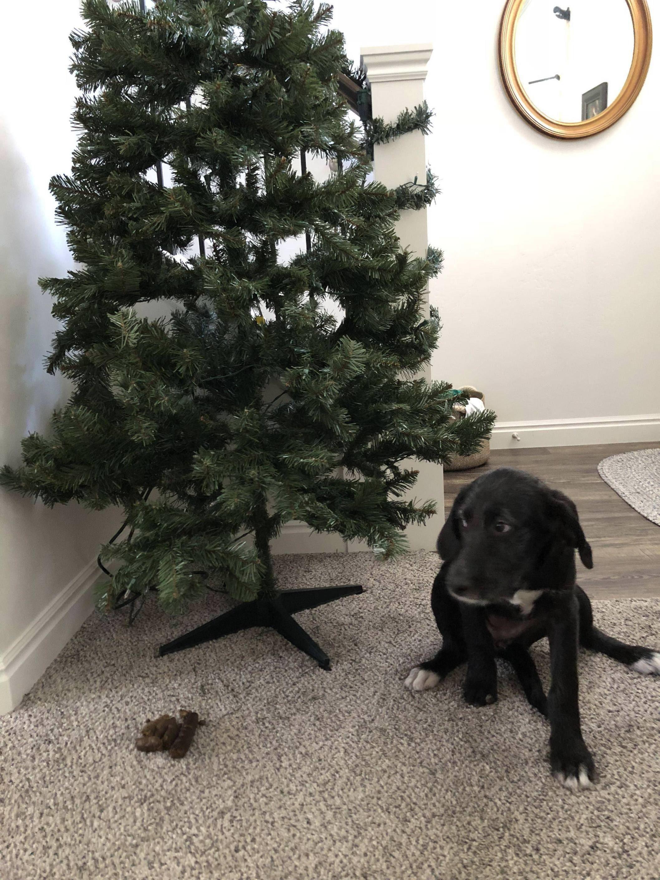 dog-poop