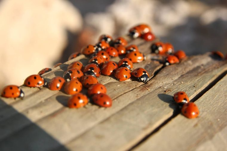 A lot of ladybirds catching the last sunlight of the sunny day.