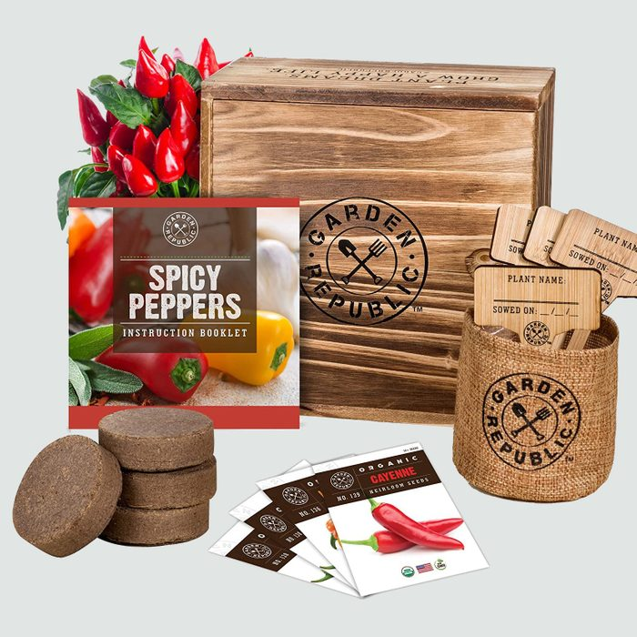 spicy pepper growing kit
