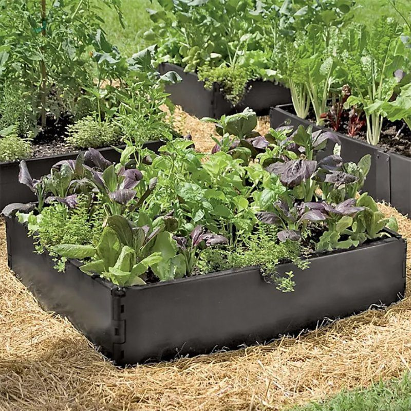 lettuce grow at home