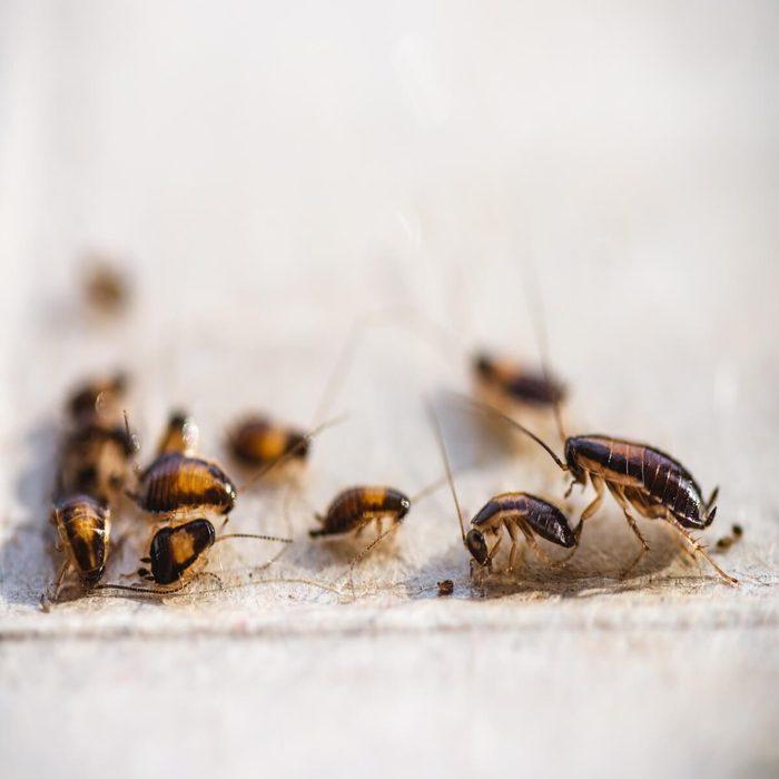 cockroach intrusion